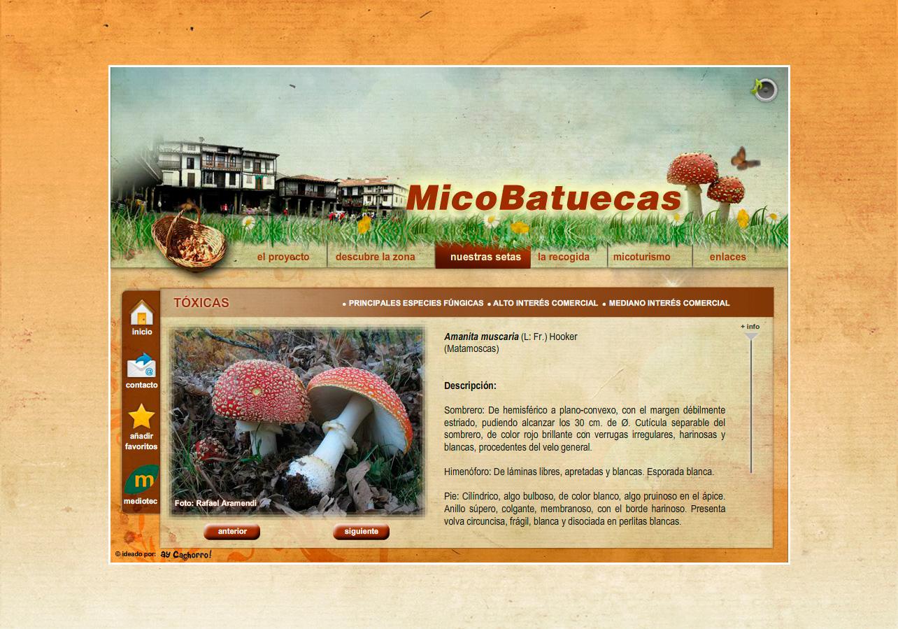 MicoBatuecas estudio micológico del Parque Natural de las Batuecas-Sierra de Francia